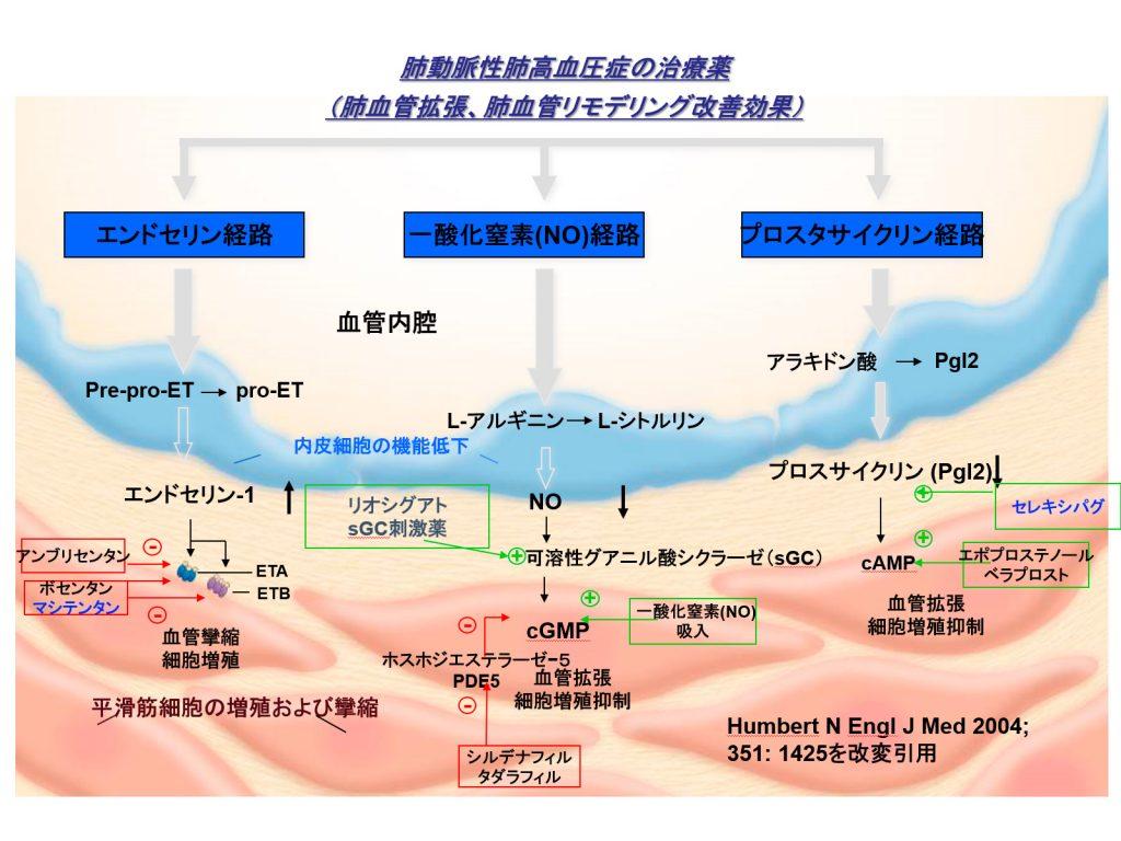 肺動脈性肺高血圧症の治療薬